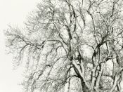 Winter Trees near Yearle #03